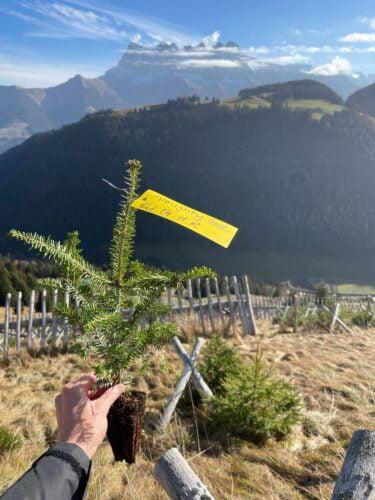 Plantation d'arbres avec Almighty Tree